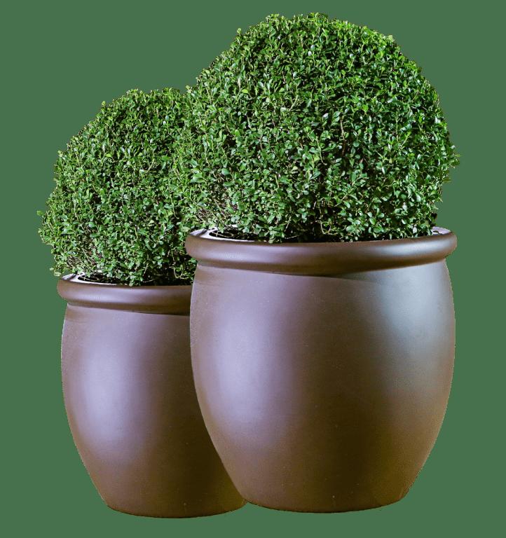 2 vasos fazendo conjunto